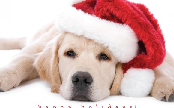 Dog Christmas Cards Dog