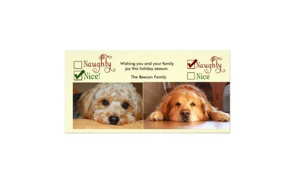 Two dog Christmas card photo