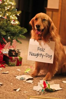 Dog shaming, anyone? Christmas photo ideas from around the web.