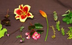 Examples of plants that do not press well and will turn brown when dry due to their high water content.
