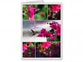 Hummingbird greeting cards